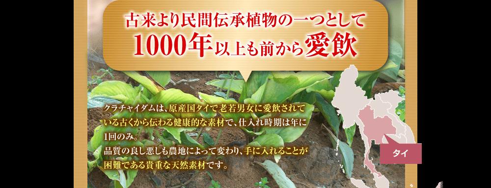 古来より民間伝承植物の一つとして1000年以上も前から愛飲。クラチャイダムは、より安全と健康に良いものであるというお墨付きをタイ政府が与えた素材で、仕入れ時期は年に1回のみ。品質の良し悪しも農地によって変わり、手に入れることが困難である貴重な天然素材です。